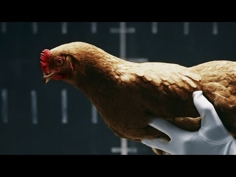 "Mercedes-Benz's  ""Chicken"" TV commercial"
