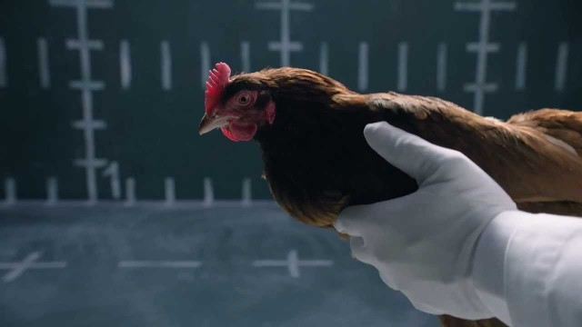 "Jaguar's  ""Chicken"" TV Commercial Poking Mercedes-Benz"