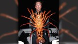 Giant Lobster: Biologist Discovers 70-Year-Old Crustacean